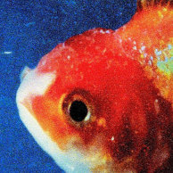 ​Vince Staples «Big Fish Theory»